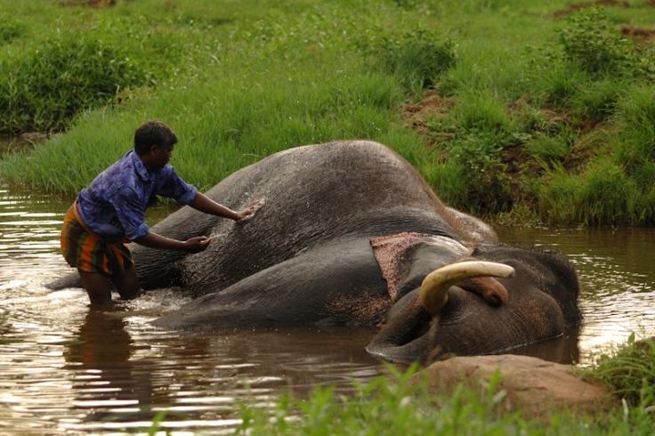 Jom! Tendang kepala gajah.